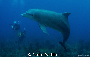 Dolphin playing with us.